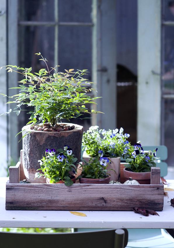 Pflanzenfreude.de