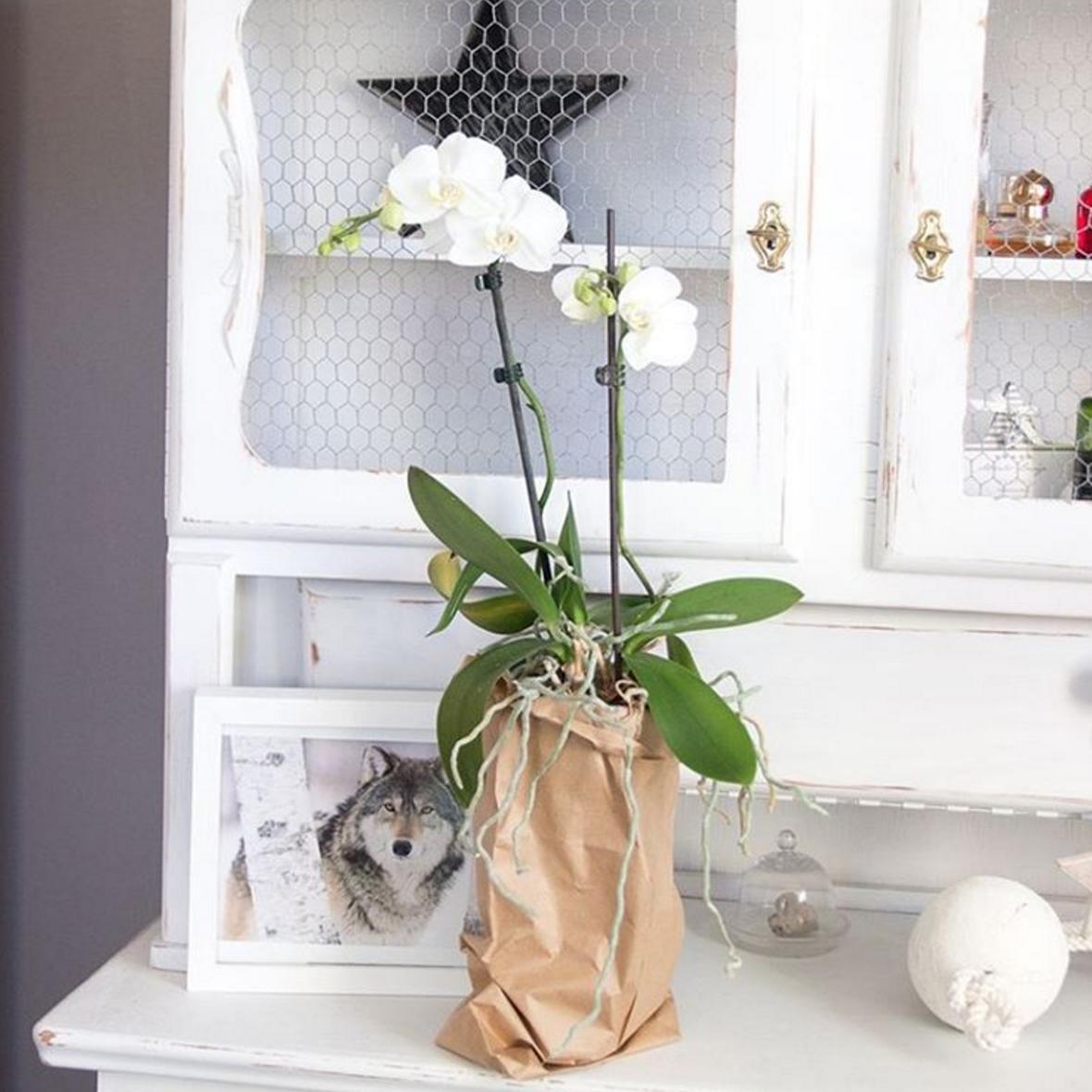 weisse-orchidee-in-papiertuete