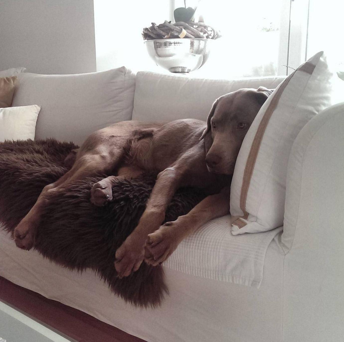 sofa-mit-hund-richtungswechsel