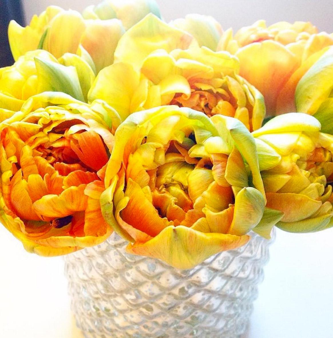 gelbe-gefuellte-tulpen-blog