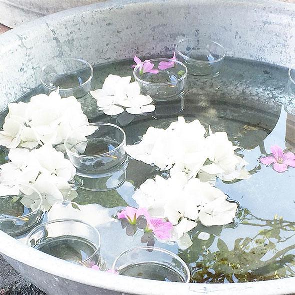 hortensien-in-schale-mit-wasser